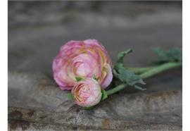 Fleur Butterblume